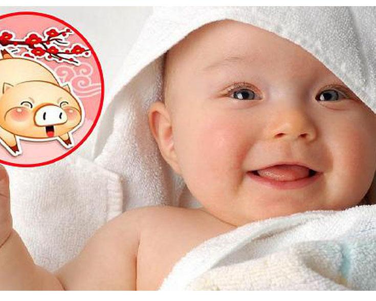 Lên kế hoạch sinh con năm Kỷ Hợi – Heo vàng, 60 năm mới có một?