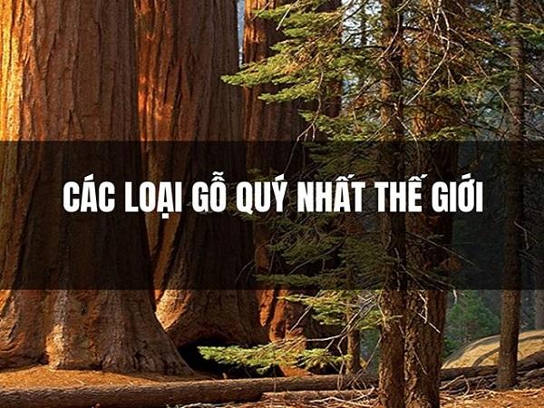 Gỗ gì đắt nhất thế giới? TOP 7 loại gỗ đắt nhất